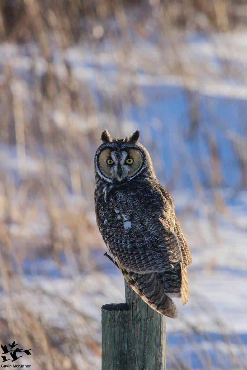 Big Year Archives - Birds Calgary